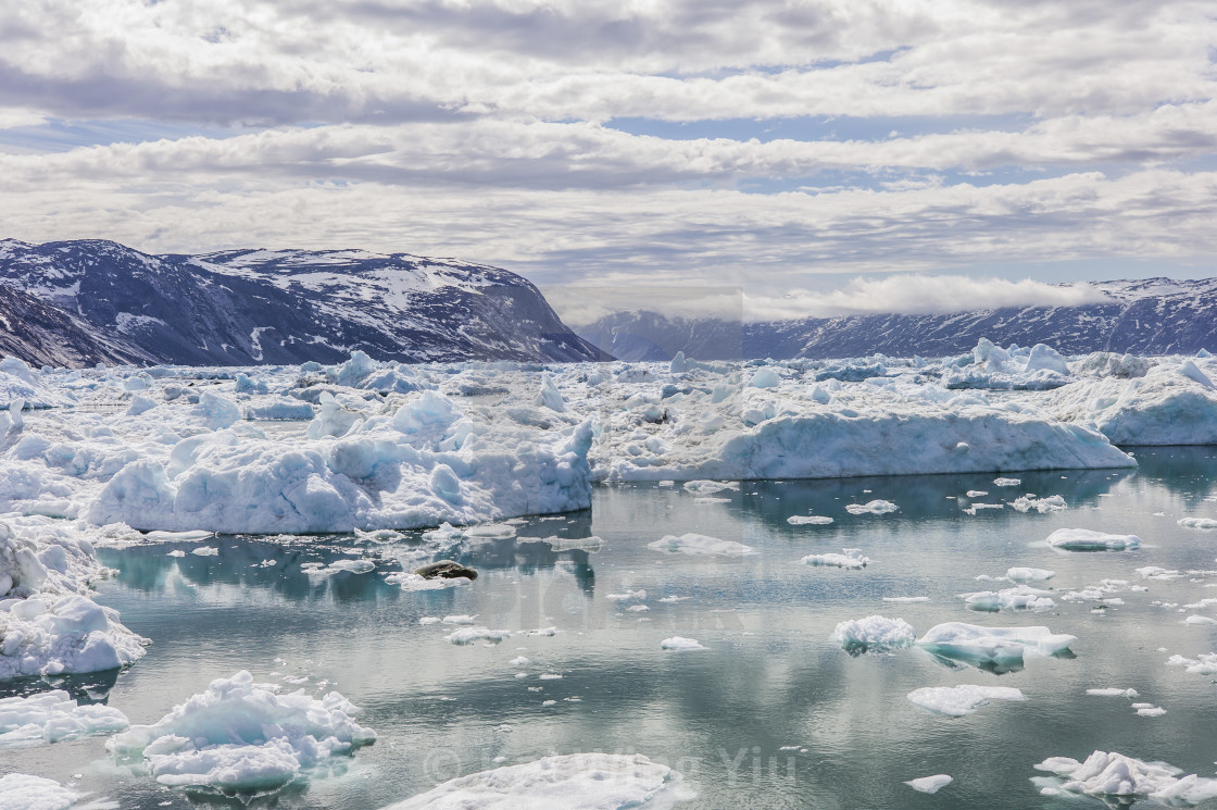 """The floating ice all over the sea, Ilulissat"" stock image"