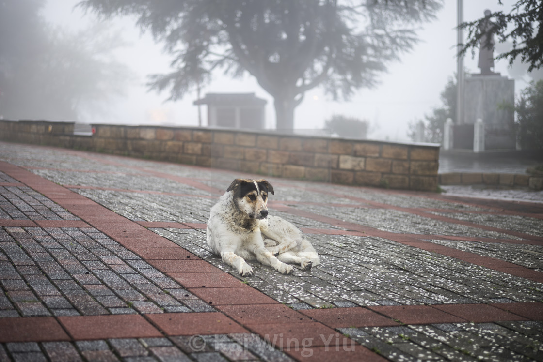 """A lonely dog, Li Shan, Taiwan"" stock image"