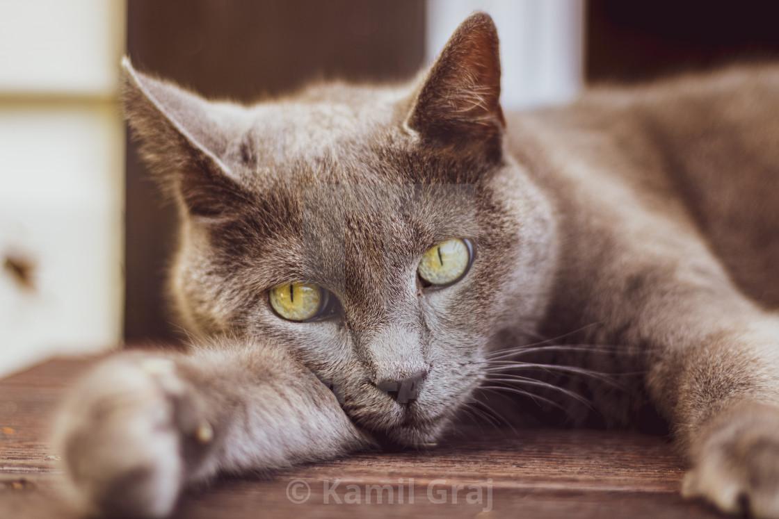 """Ellie the cat"" stock image"