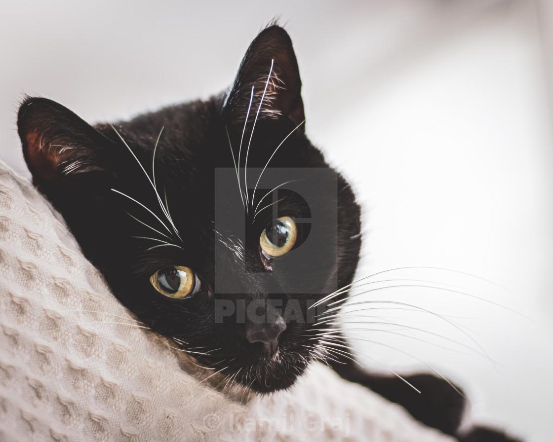 """Meowlo"" stock image"