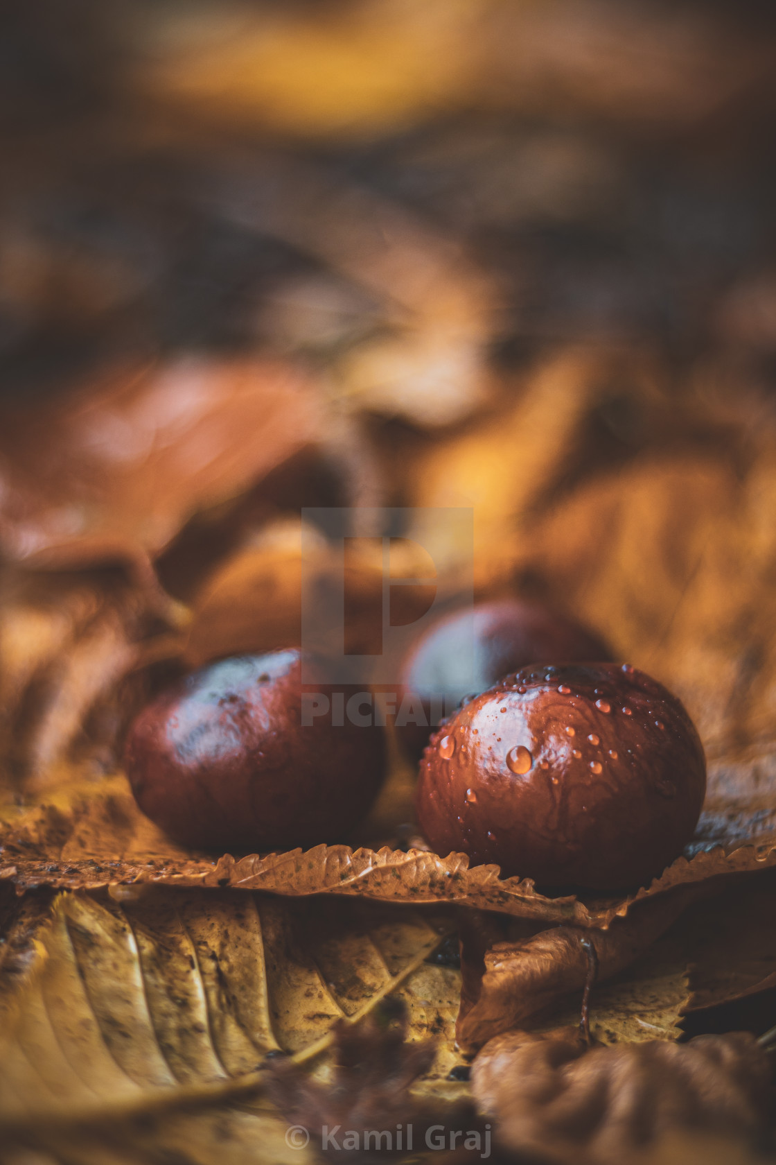 """Signs of autumn"" stock image"