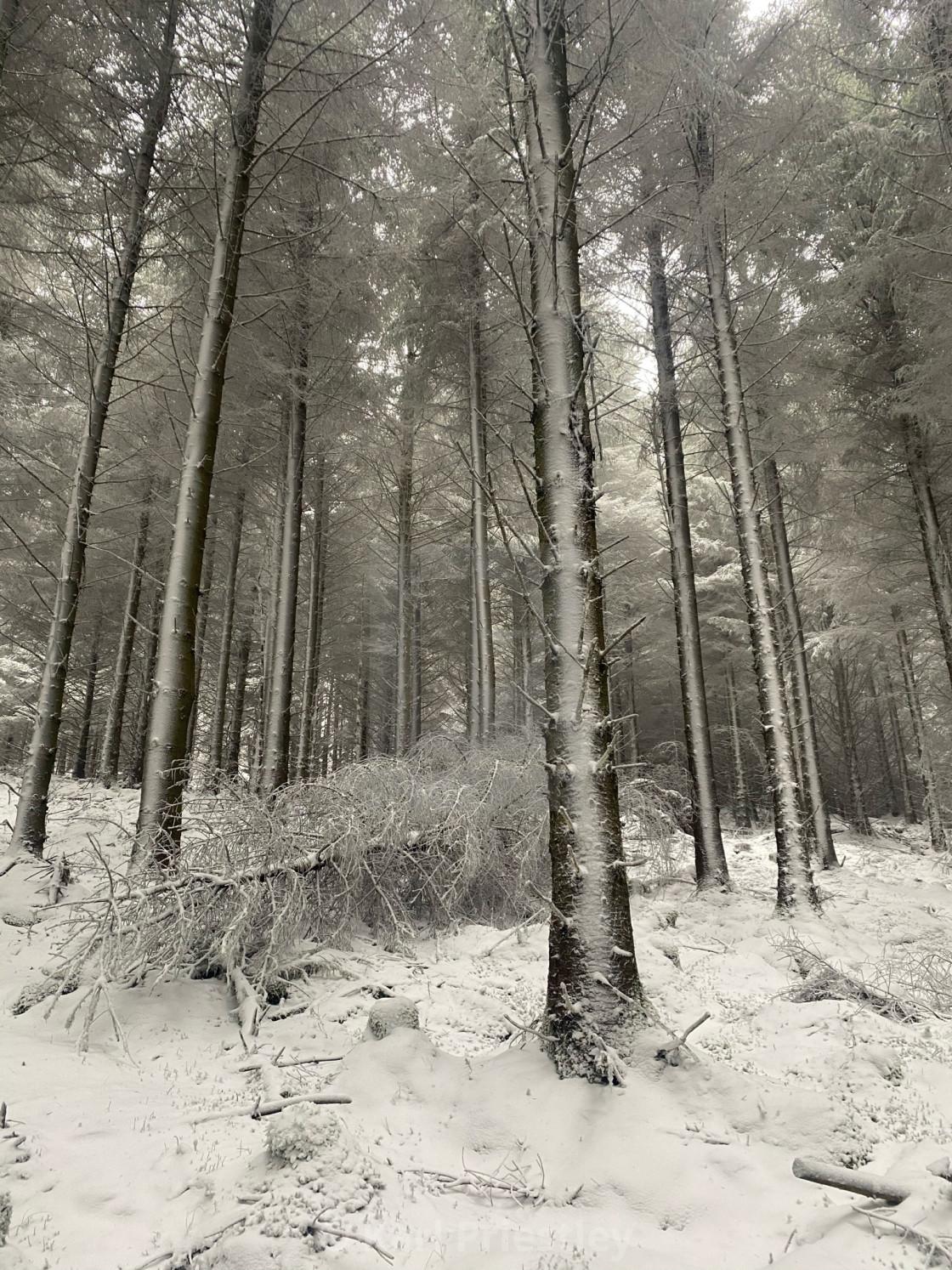 """The Fallen Pine"" stock image"