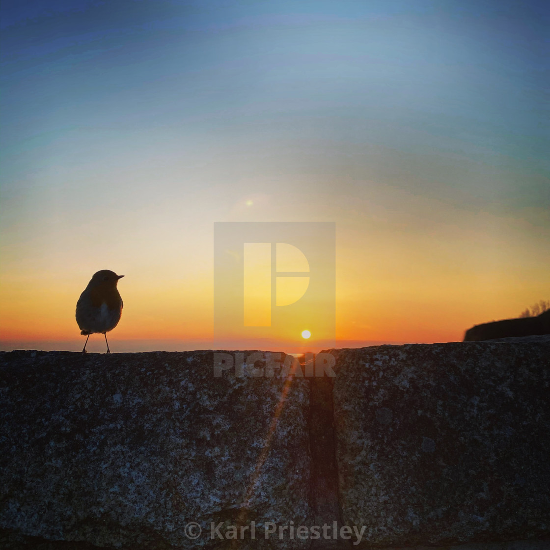 """""""The Early Bird"""" stock image"""