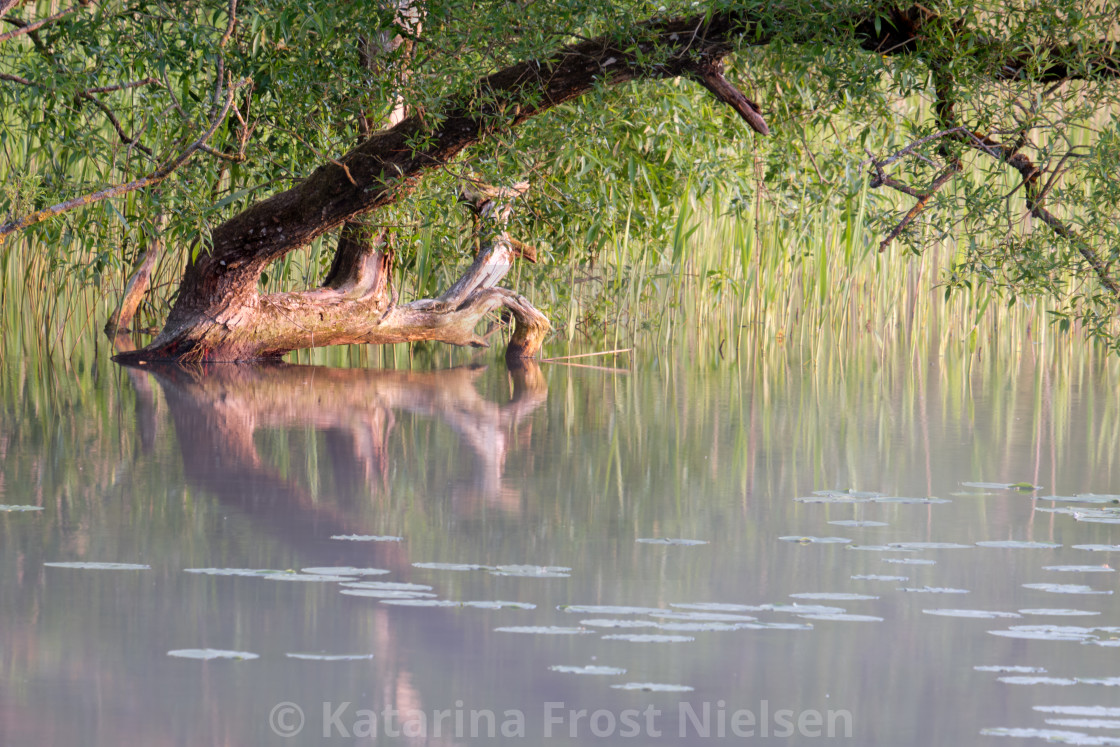 """""""Branch shining over the lake"""" stock image"""