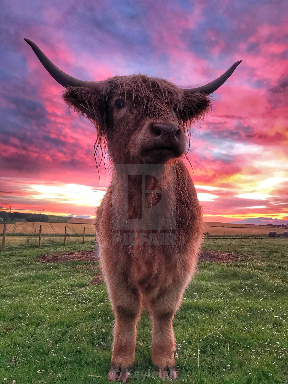 """""""Rona loves a sunset"""" stock image"""