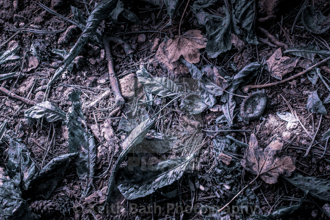 Abstract take on fallen leaves