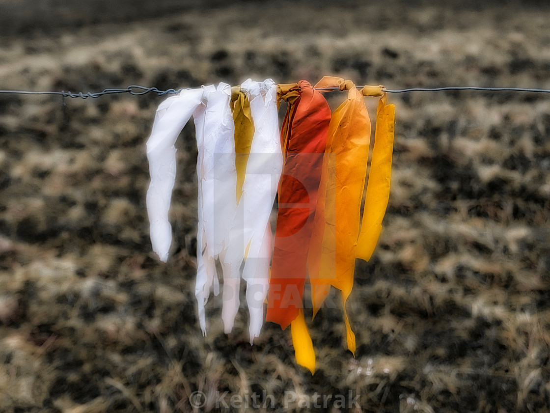 Plastic Ribbons