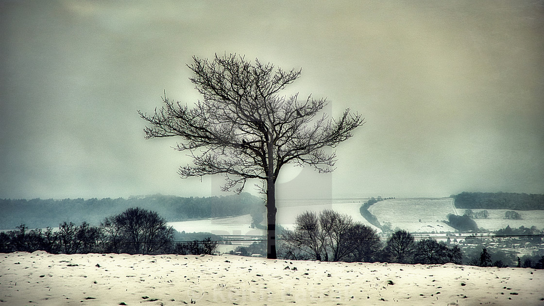 The Lone Tree - Potterne Field, Devizes, Wiltshire, England