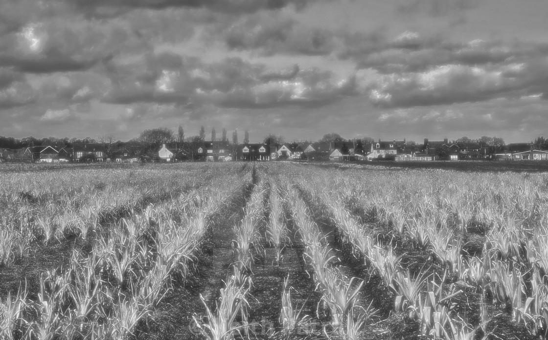 """Leek Fields - Bromham, Wiltshire, England"" stock image"
