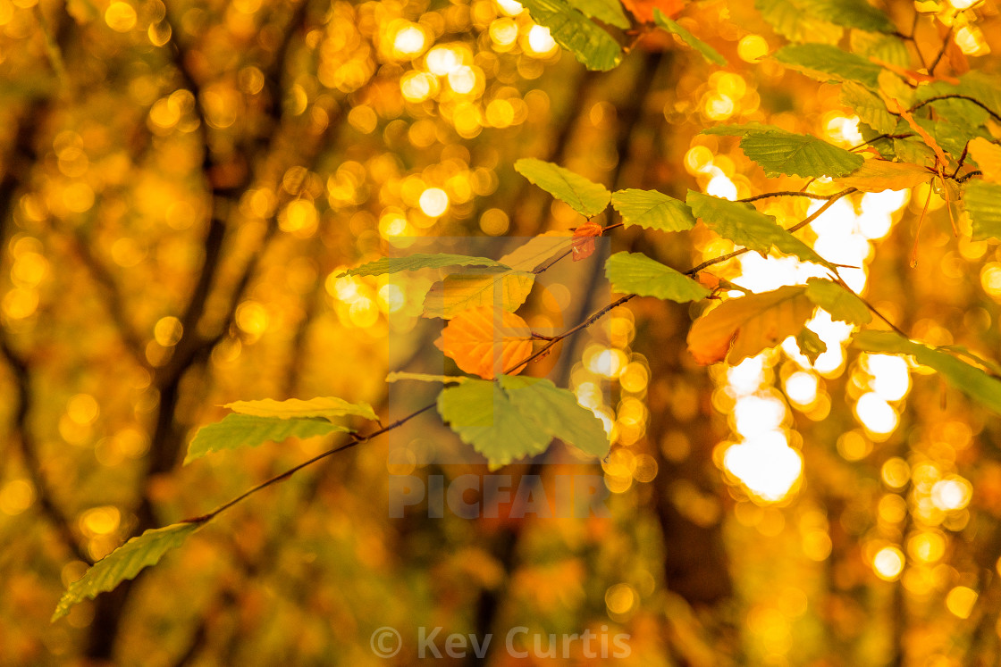 """""""Autumn leaves on a tree"""" stock image"""