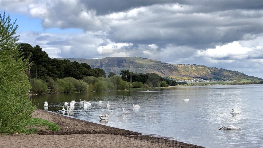 """Swan Loch"" stock image"