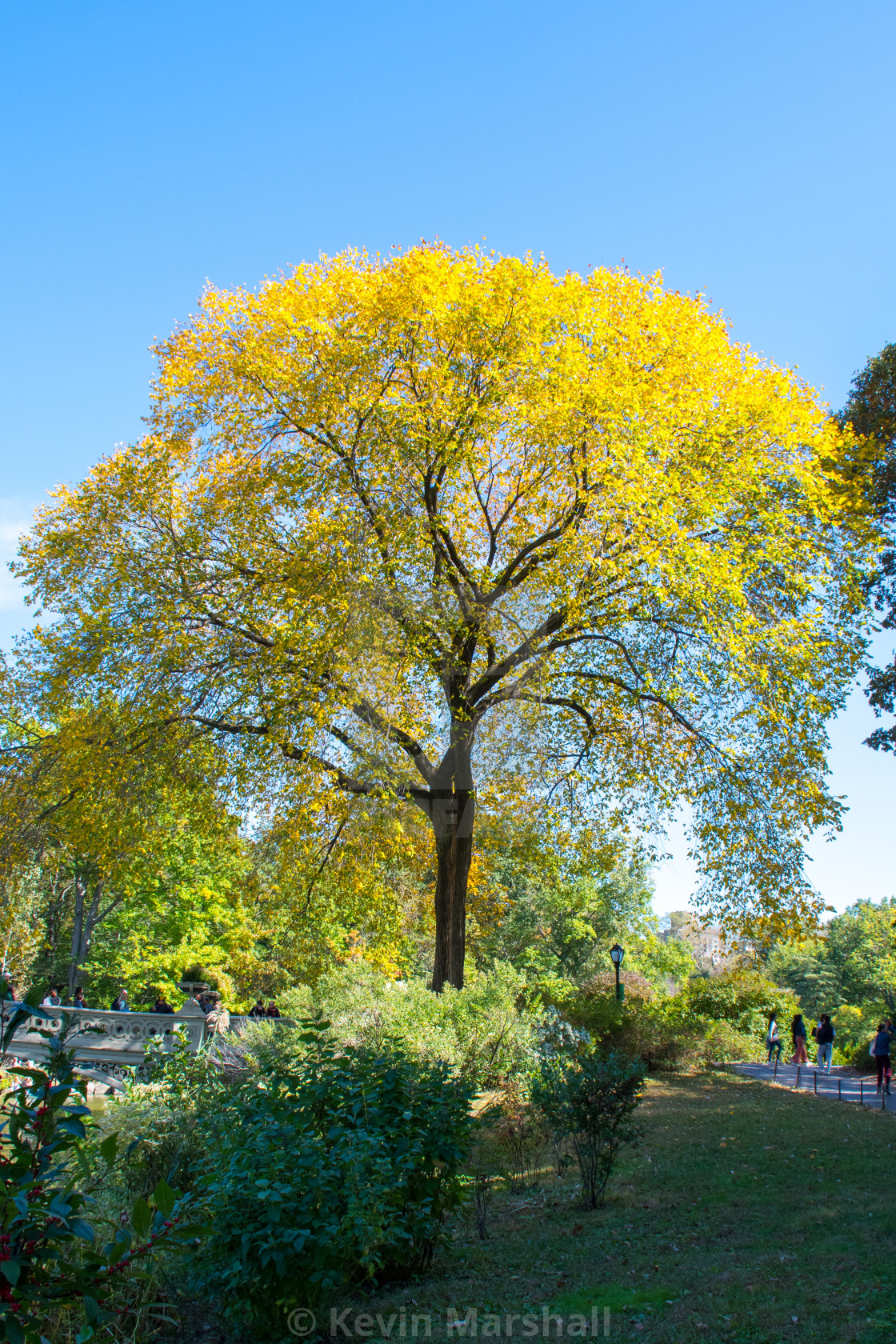 """""""Central Tree"""" stock image"""