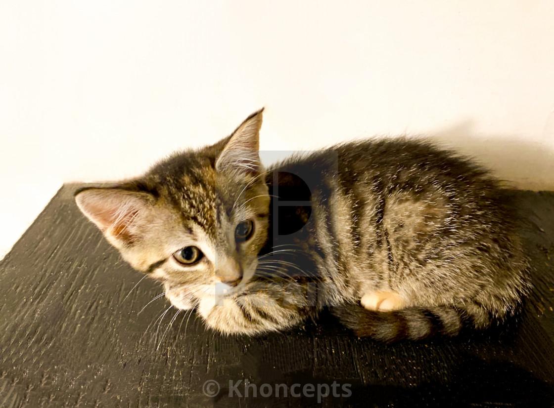 Gray striped kitten on black stairs