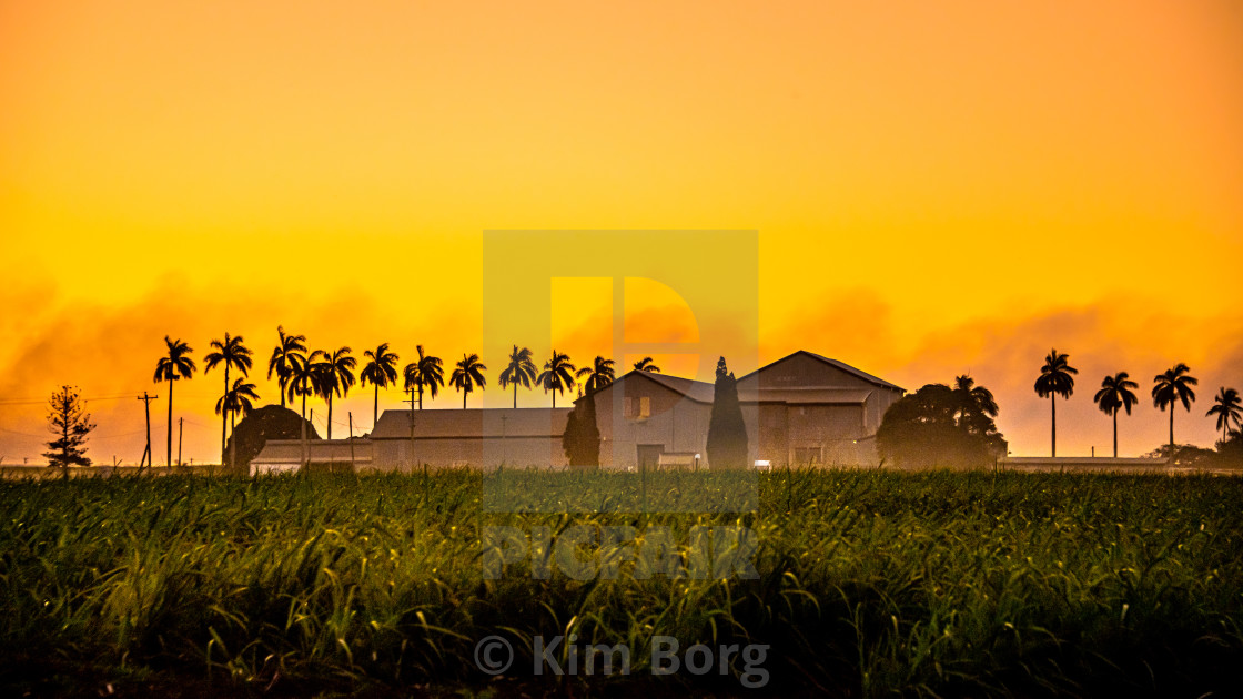 """Canefields on Sunset"" stock image"