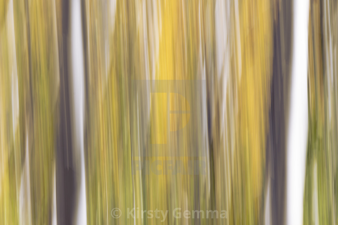"""Abstract Autumn Pt 2"" stock image"
