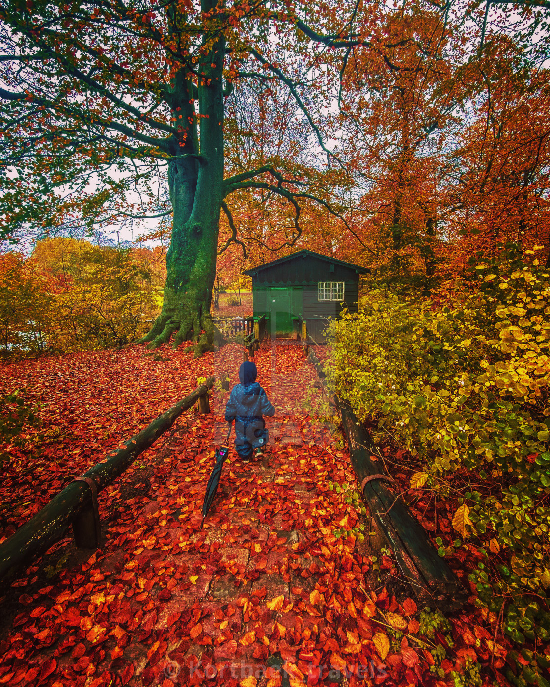 """Toddler walks through the brilliant colours of the Frederiksberg gardens, Copenhagen, Denmark"" stock image"