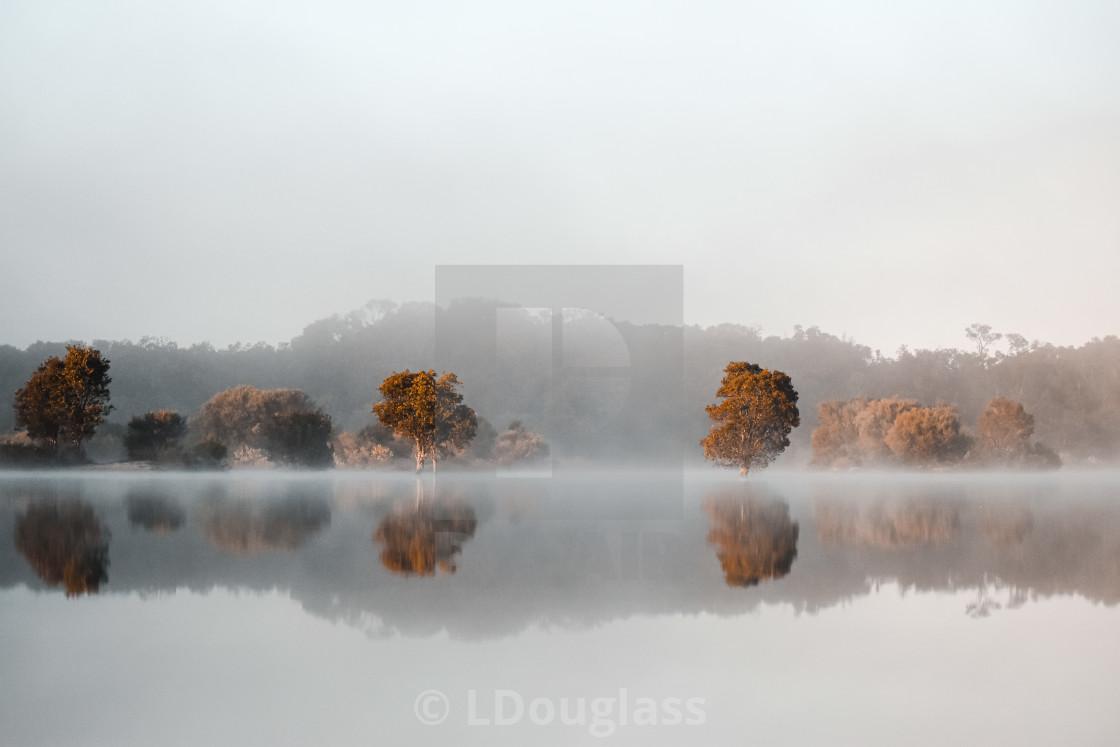 """Foggy Mornings"" stock image"