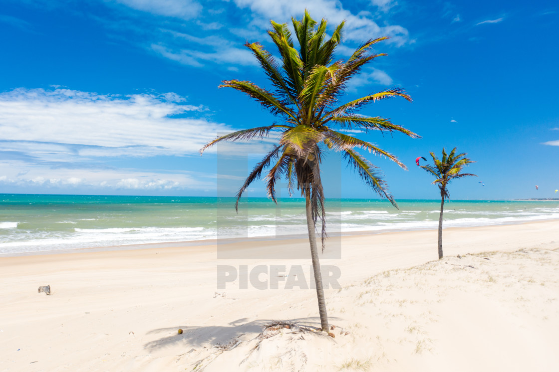 """""""Palms in Brazil"""" stock image"""