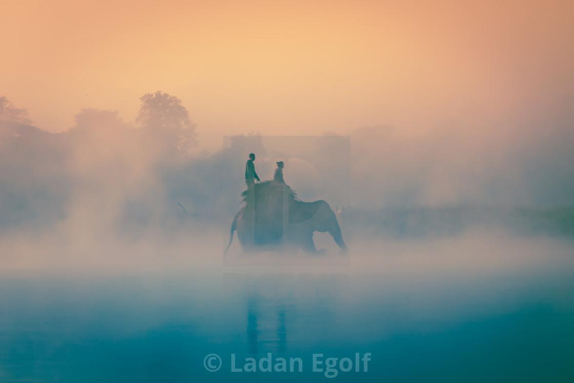 """Nepal / Elefant crossing the river"" stock image"