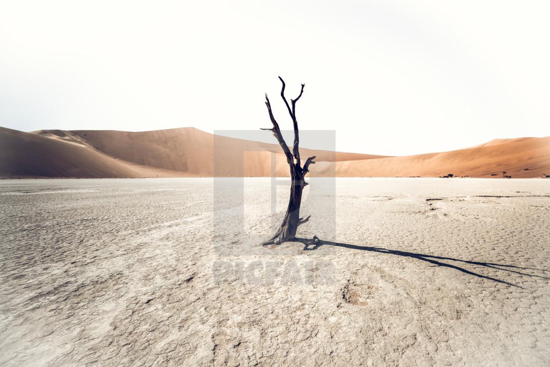 """""""Deadvlei , Namib Desert"""" stock image"""