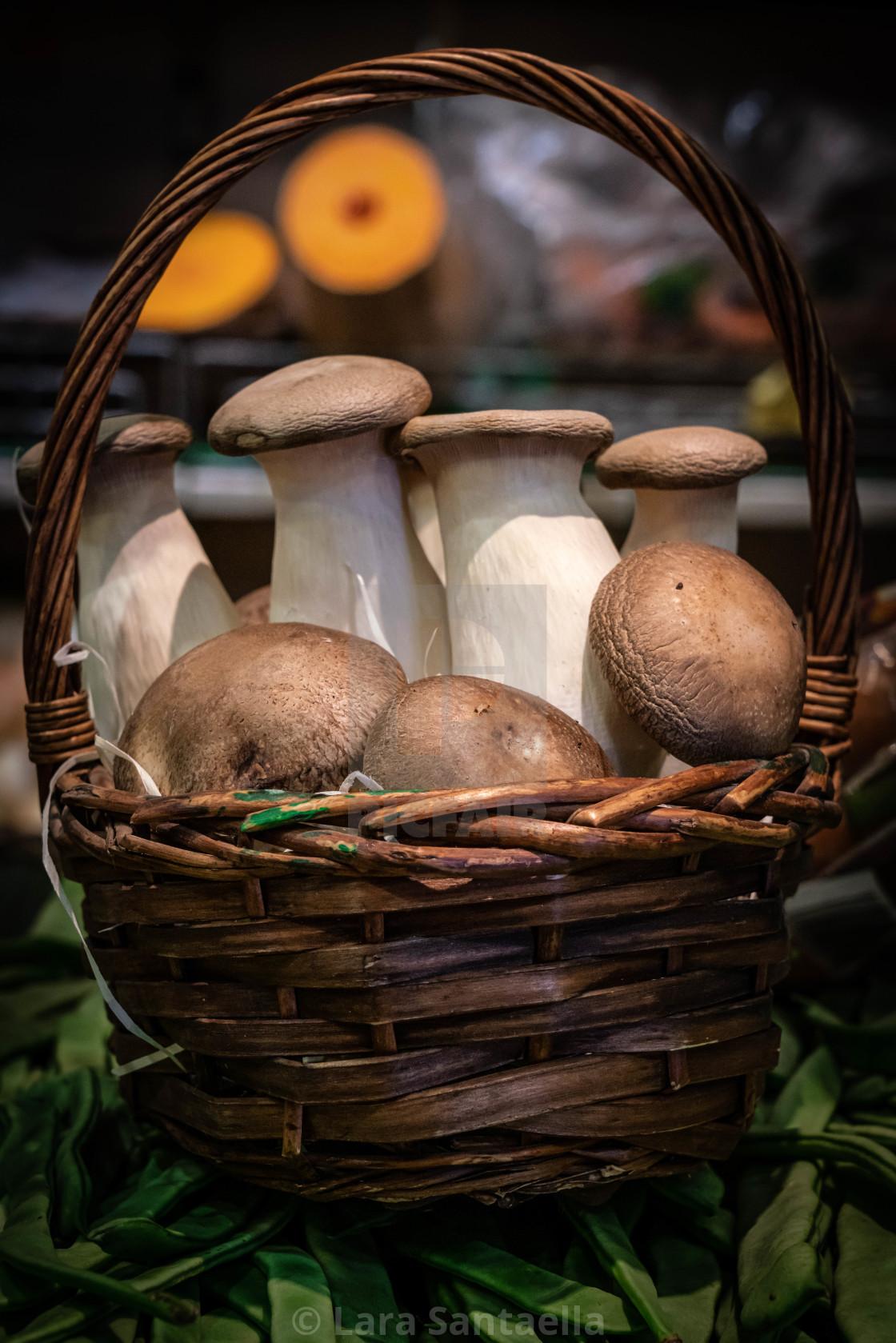 """A basket full of mushrooms"" stock image"
