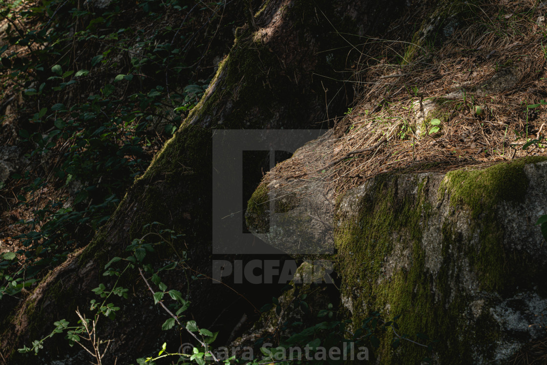 """""""The moss is strong"""" stock image"""