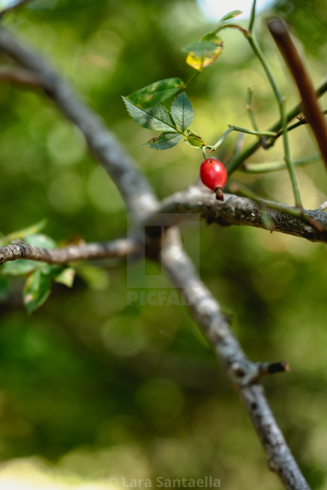 """""""And a berry grew"""" stock image"""