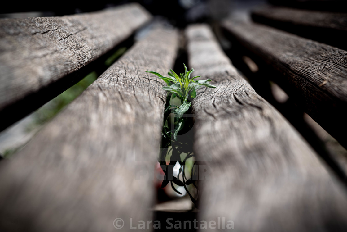 """""""Stems of hope"""" stock image"""