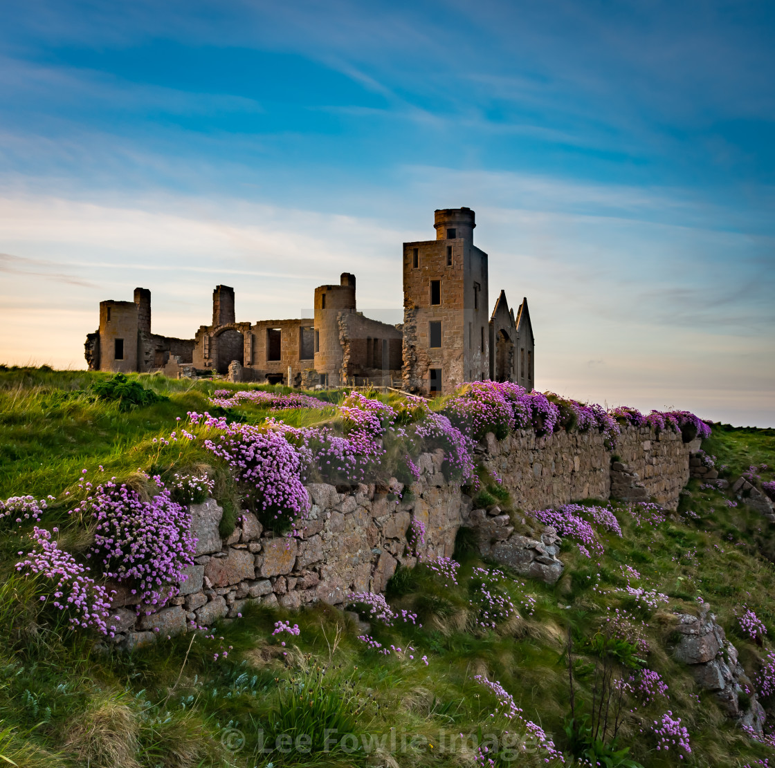 """""""New Slains Castle and Sea Pinks"""" stock image"""