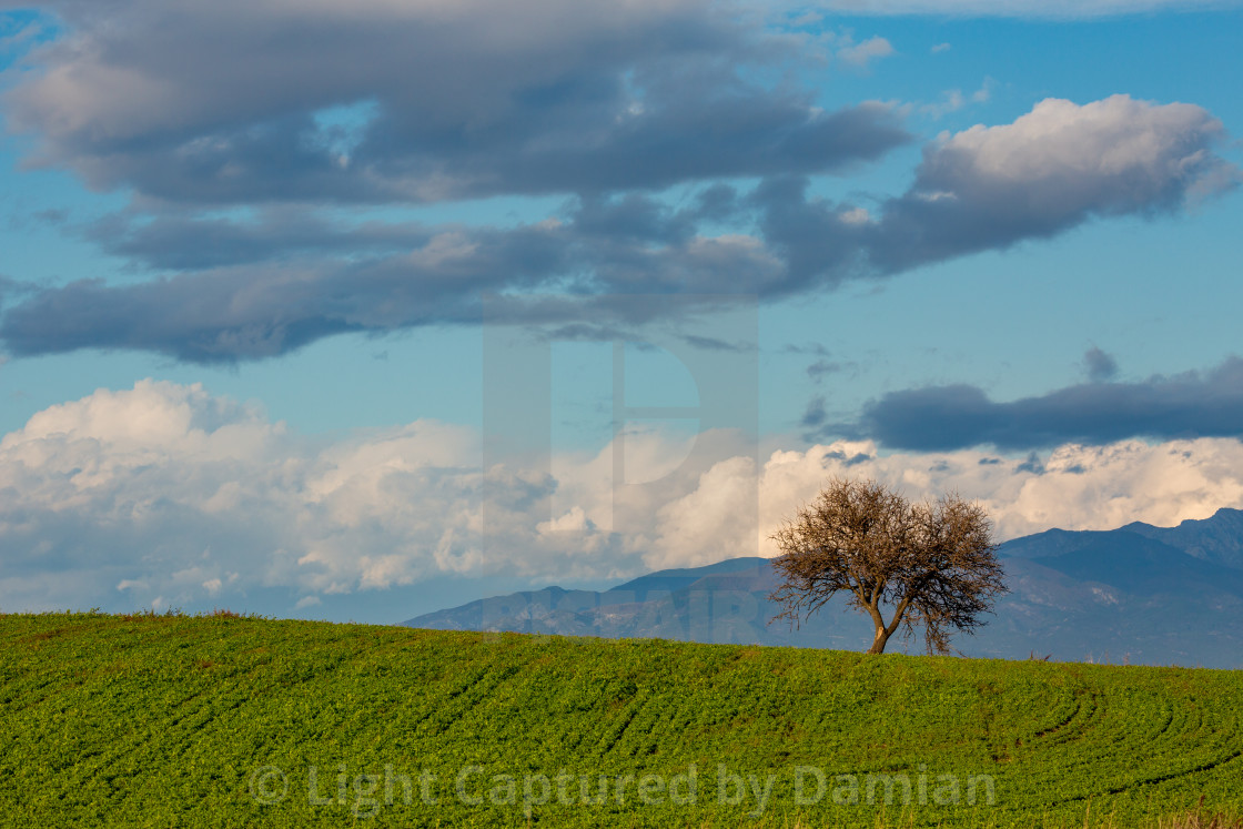 """""""Lonely tree beautiful green meadow dramatic sky"""" stock image"""