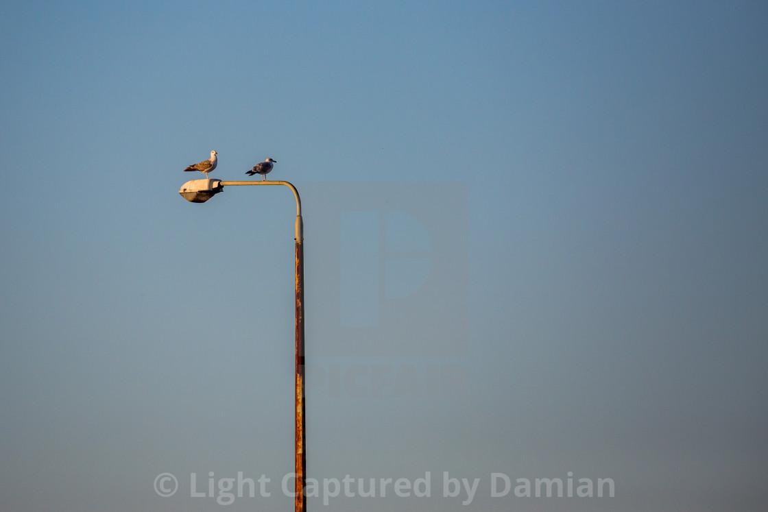"""Seagulls taking a rest on street light"" stock image"