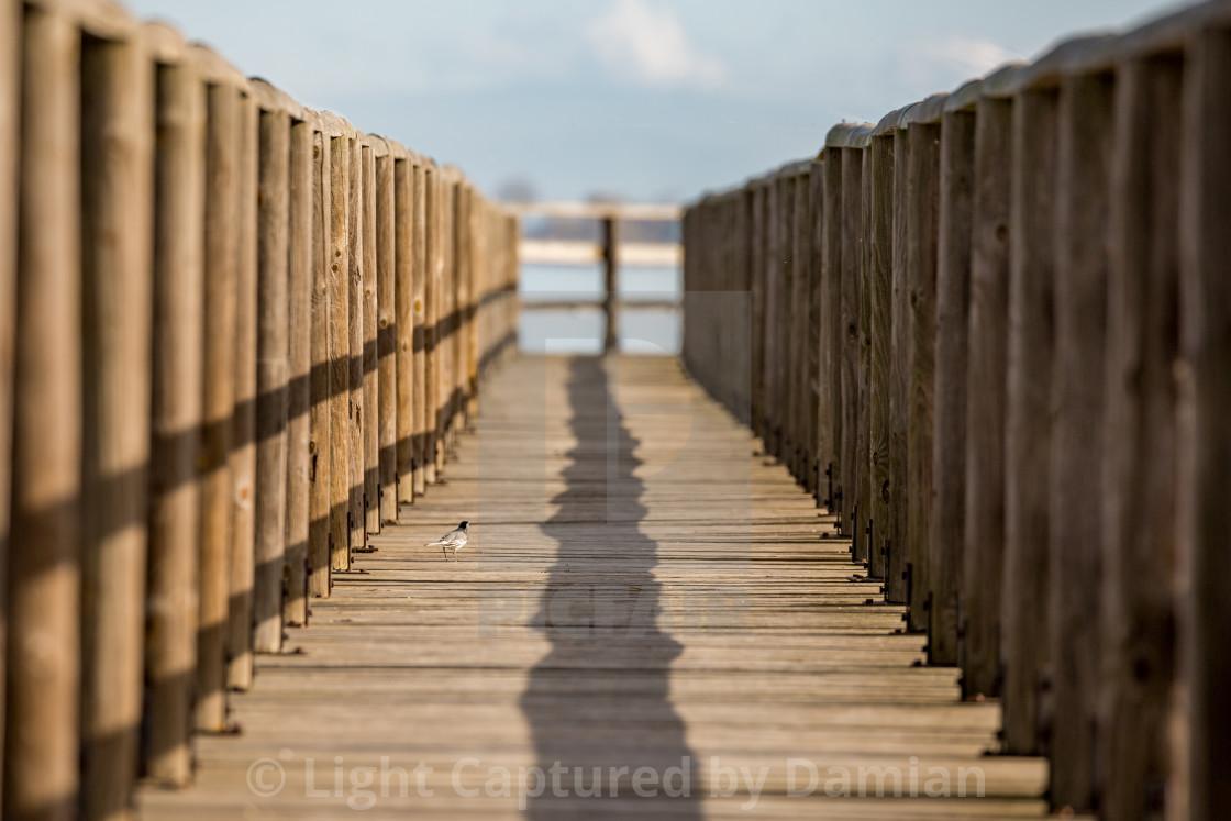 """Wooden deck with bird, lake VIstonida, Greece"" stock image"