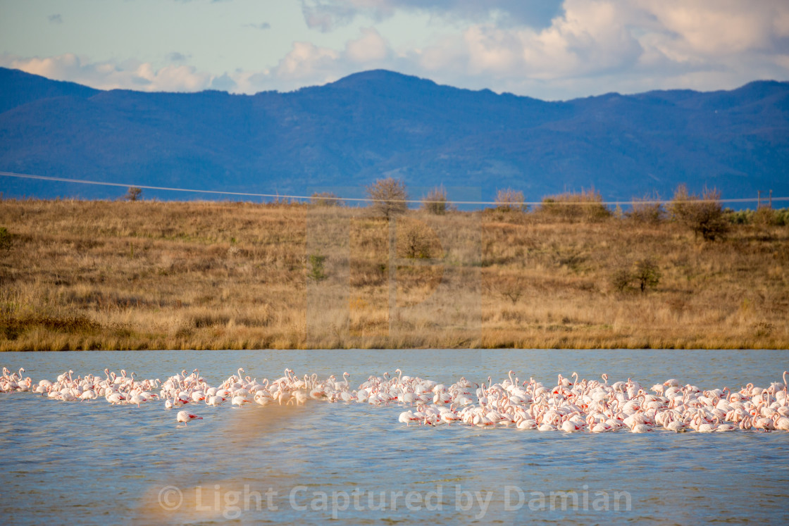 """Pelicans rest near Fanari village, Greece"" stock image"