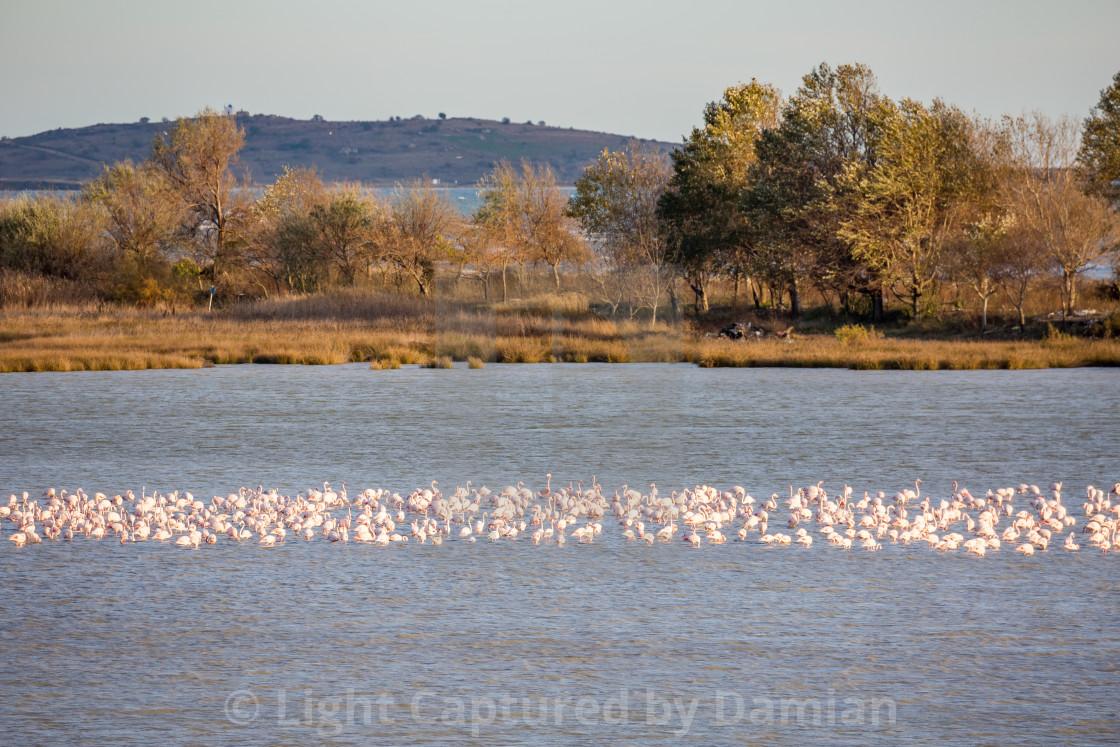 """Pelicans rest near Fanari village, Greece"" stock image"