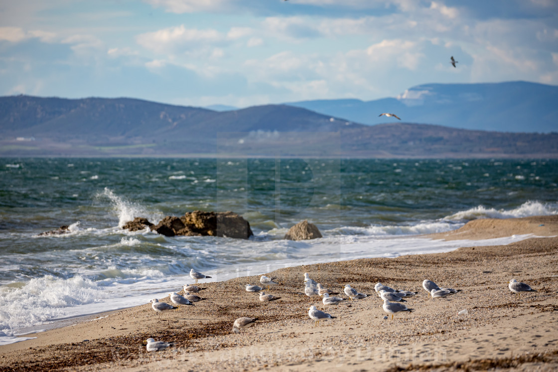 """Seagulls on the beach"" stock image"