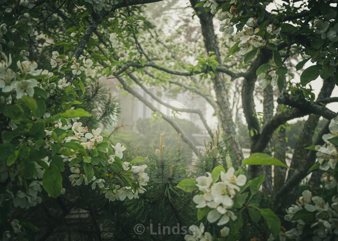 """Springtime Mists"" stock image"