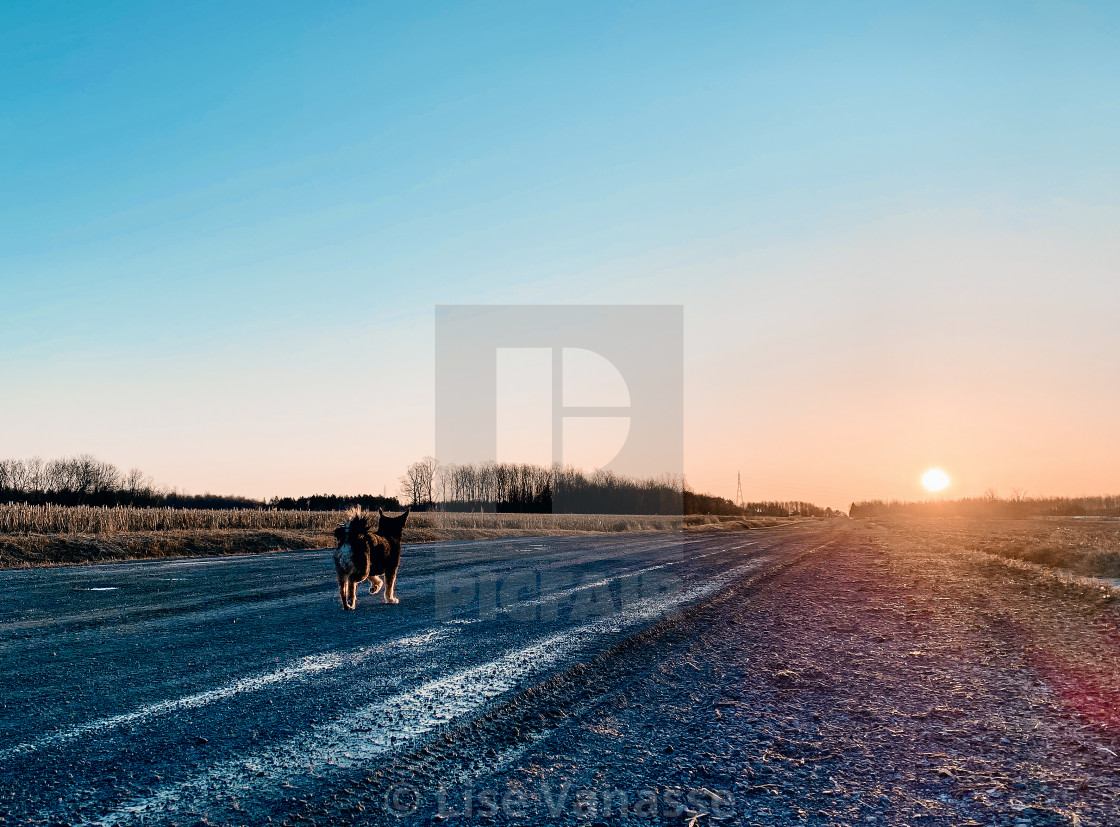 """The dog is walking towards the sun."" stock image"