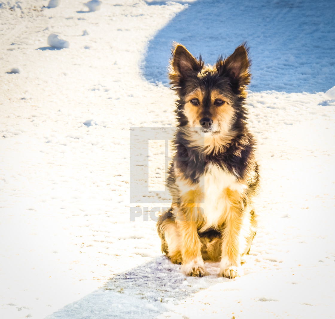 """""""My dog in winter."""" stock image"""