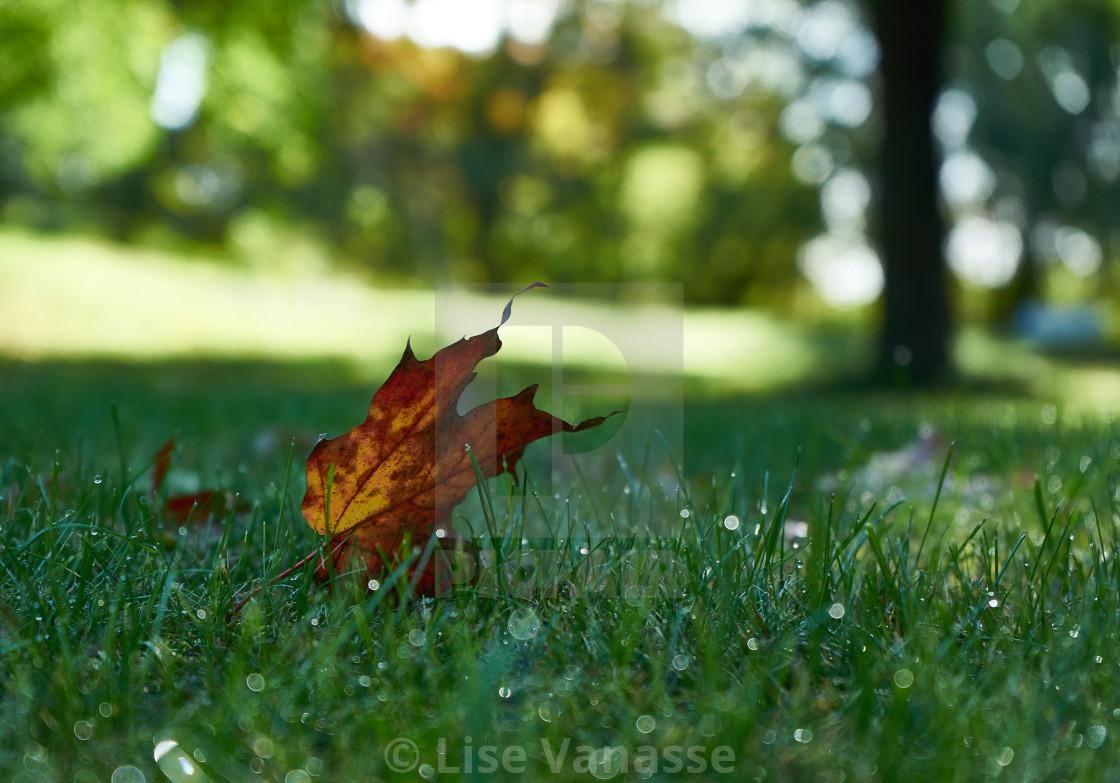 """A single leaf after a rain."" stock image"