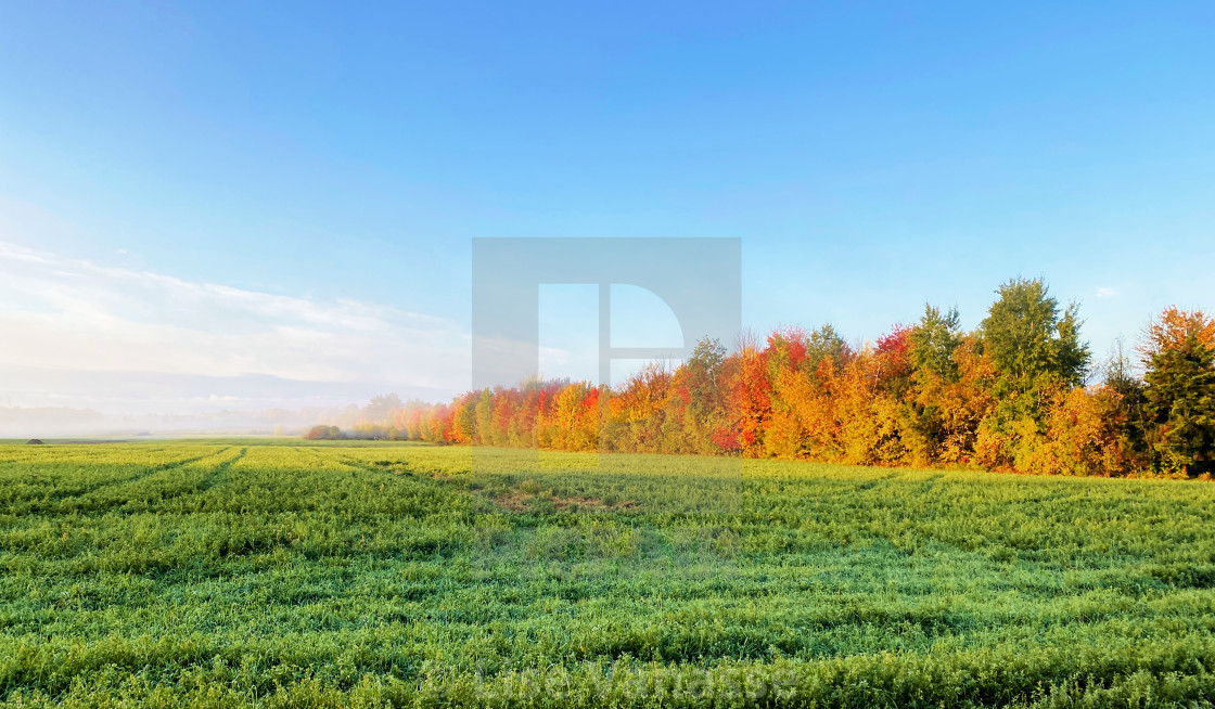 """A row of trees in different colors."" stock image"
