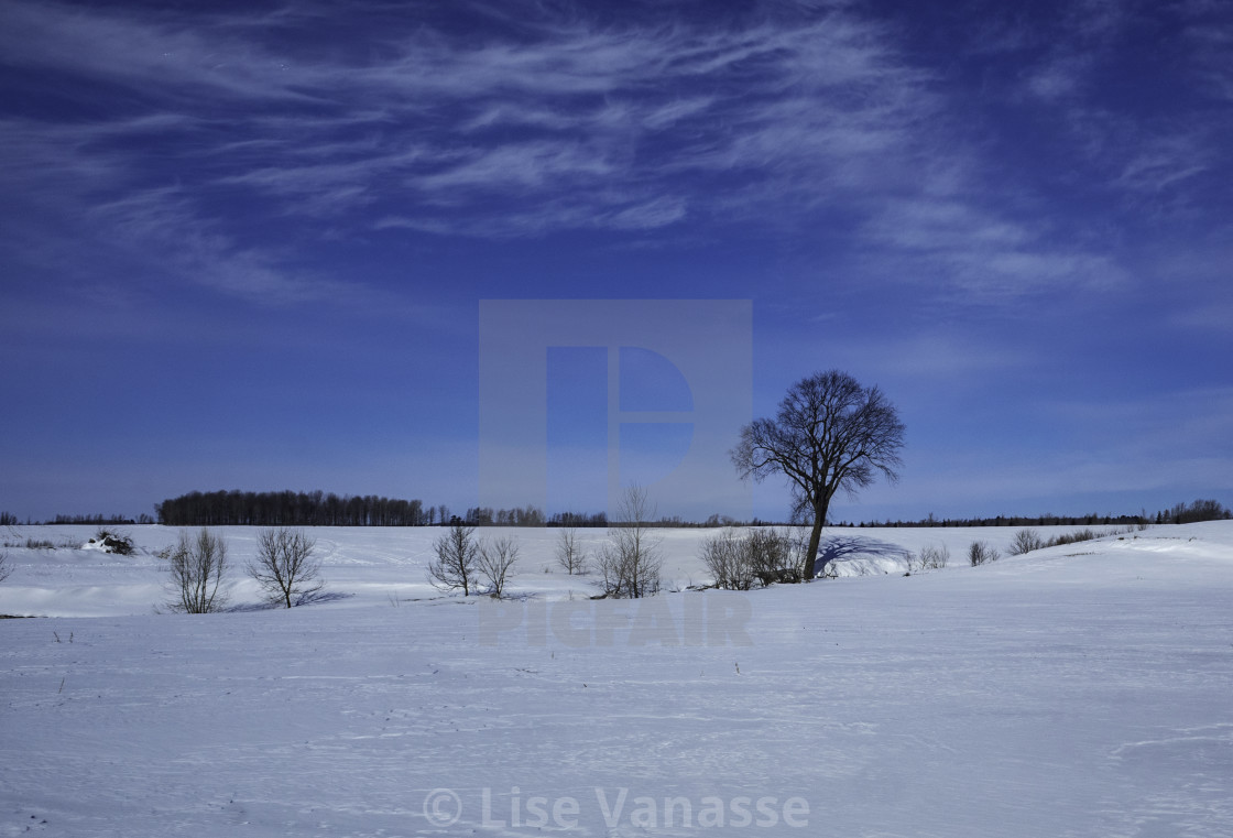 """""""A single tree in the field."""" stock image"""
