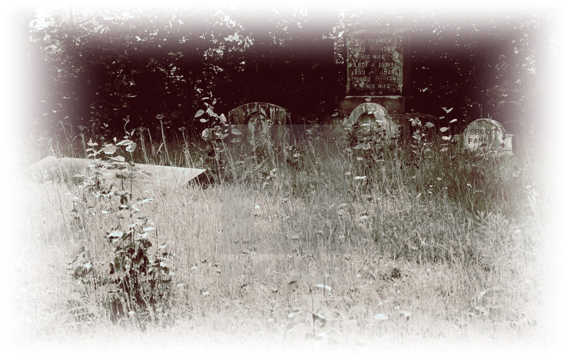 """""""An old cemetery that lives."""" stock image"""