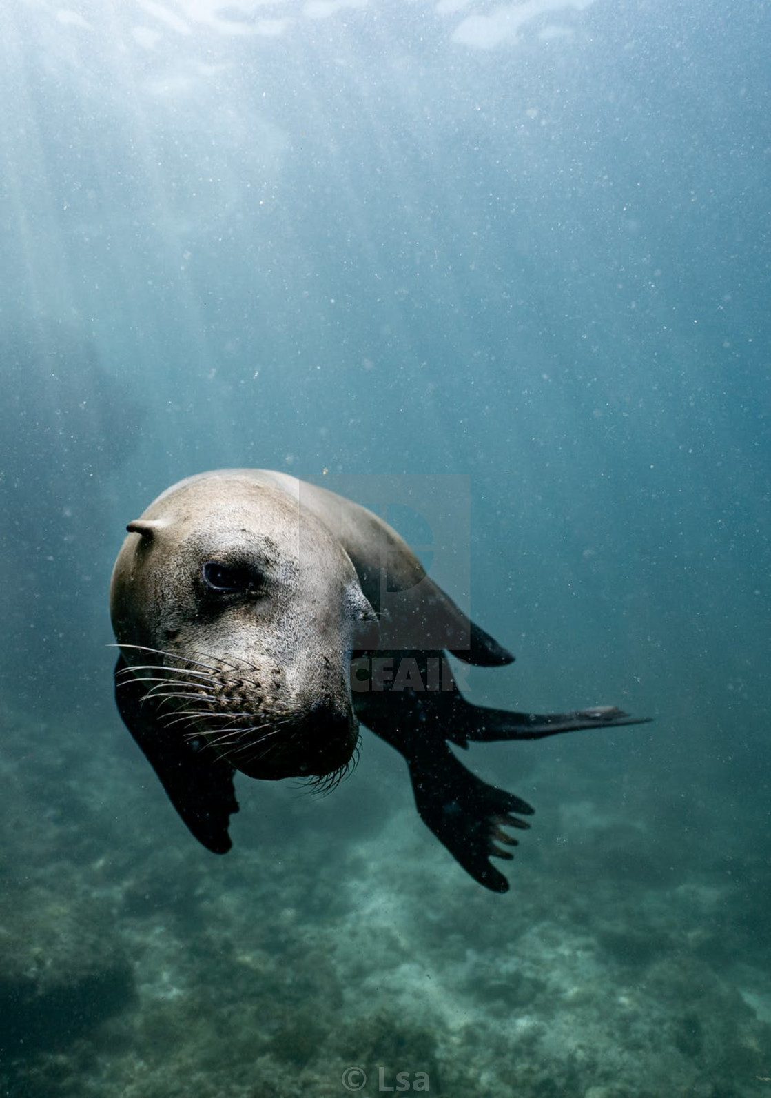 """""""Baby Seal"""" stock image"""