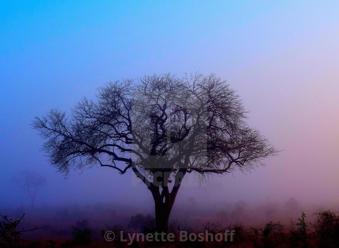 """Misty Tree"" stock image"