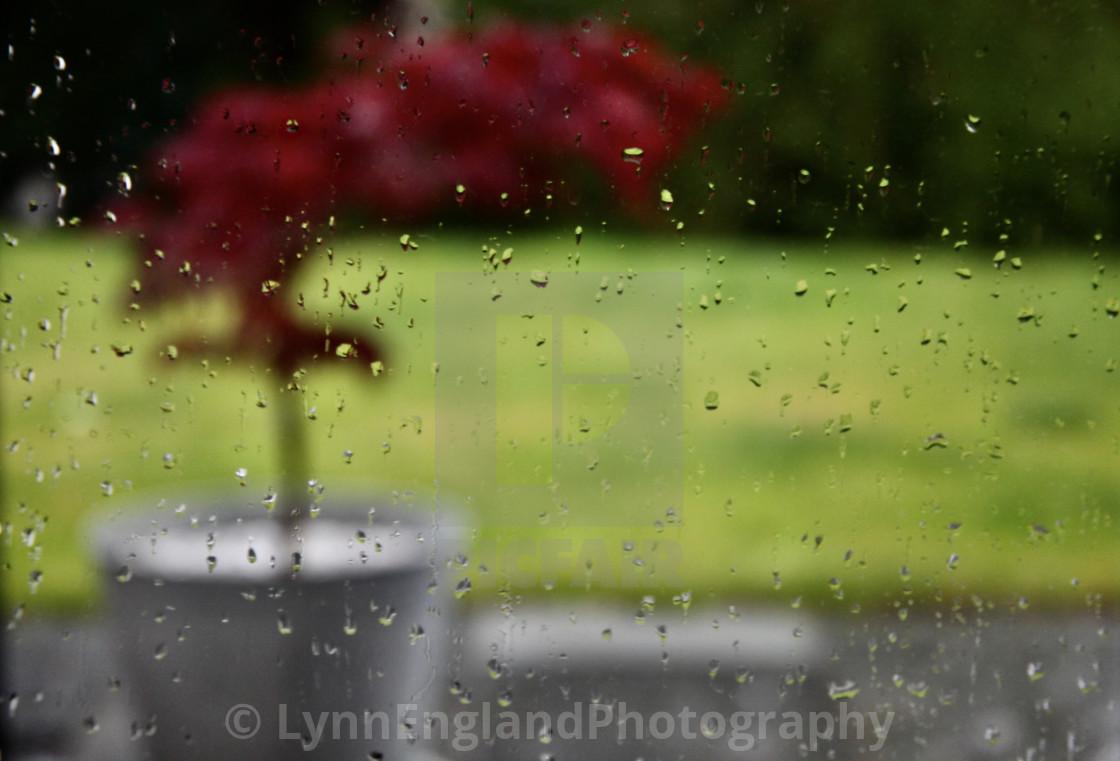 """Rainy lockdown day brightener."" stock image"