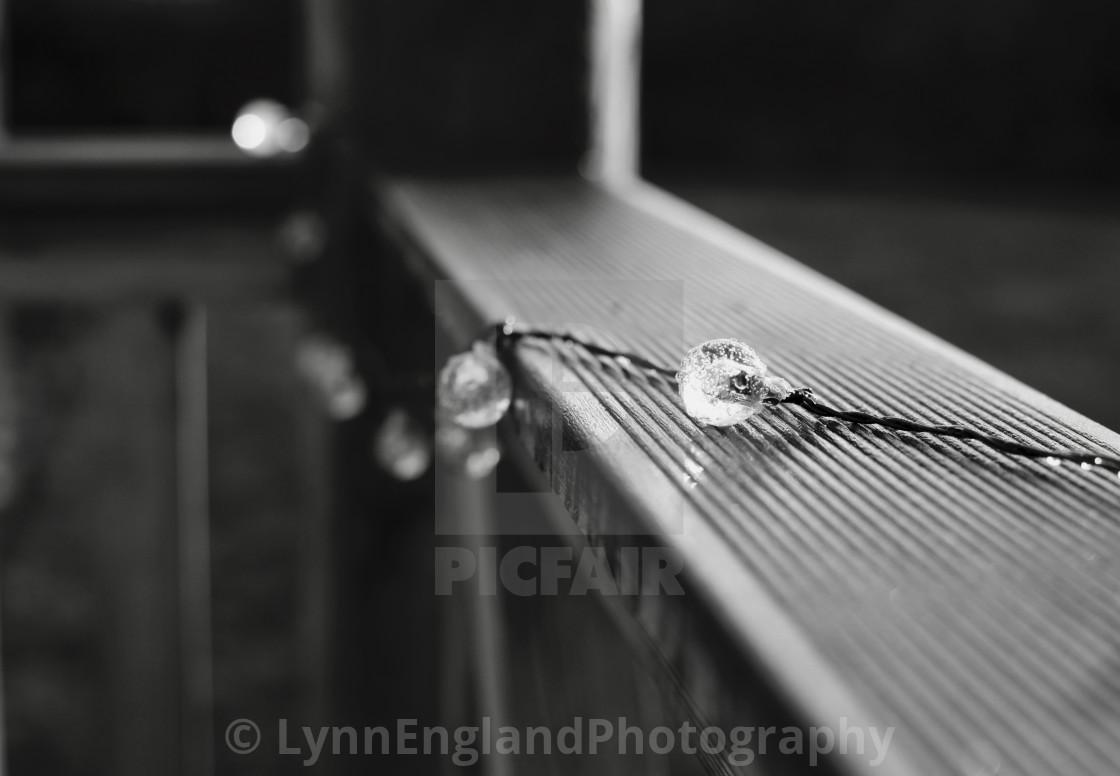 """Winter garden ...monochrome of xmas string lights ."" stock image"