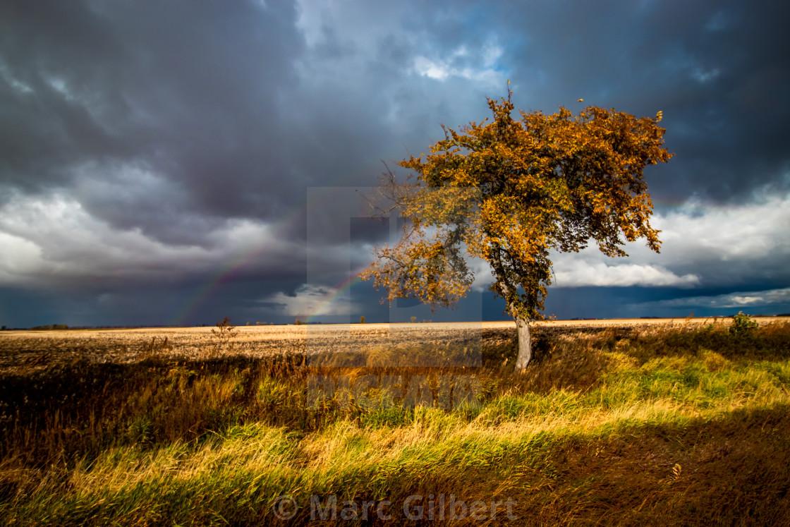 """Fall tree and double rainbow"" stock image"