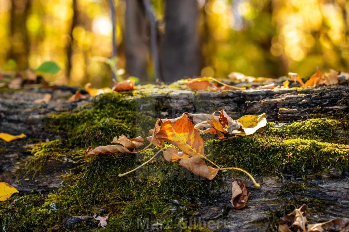 """""""Dead leaves on a mossy trunk"""" stock image"""