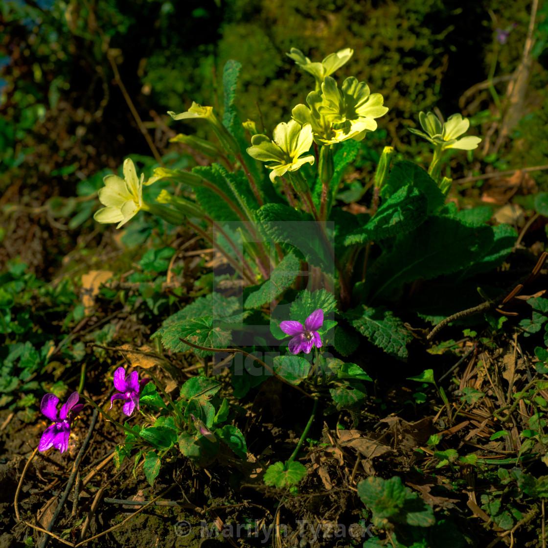 """""""Wild Springtime flowers"""" stock image"""