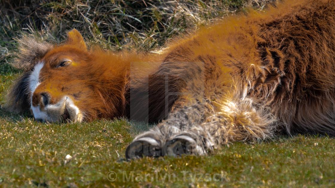 """""""Sleeping in the sun"""" stock image"""